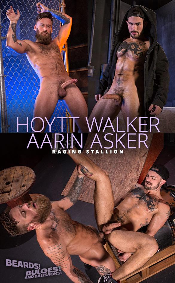"""Raging Stallion: Hoytt Walker pounds Aarin Asker in """"Beards, Bulges & Ballsacks!"""""""